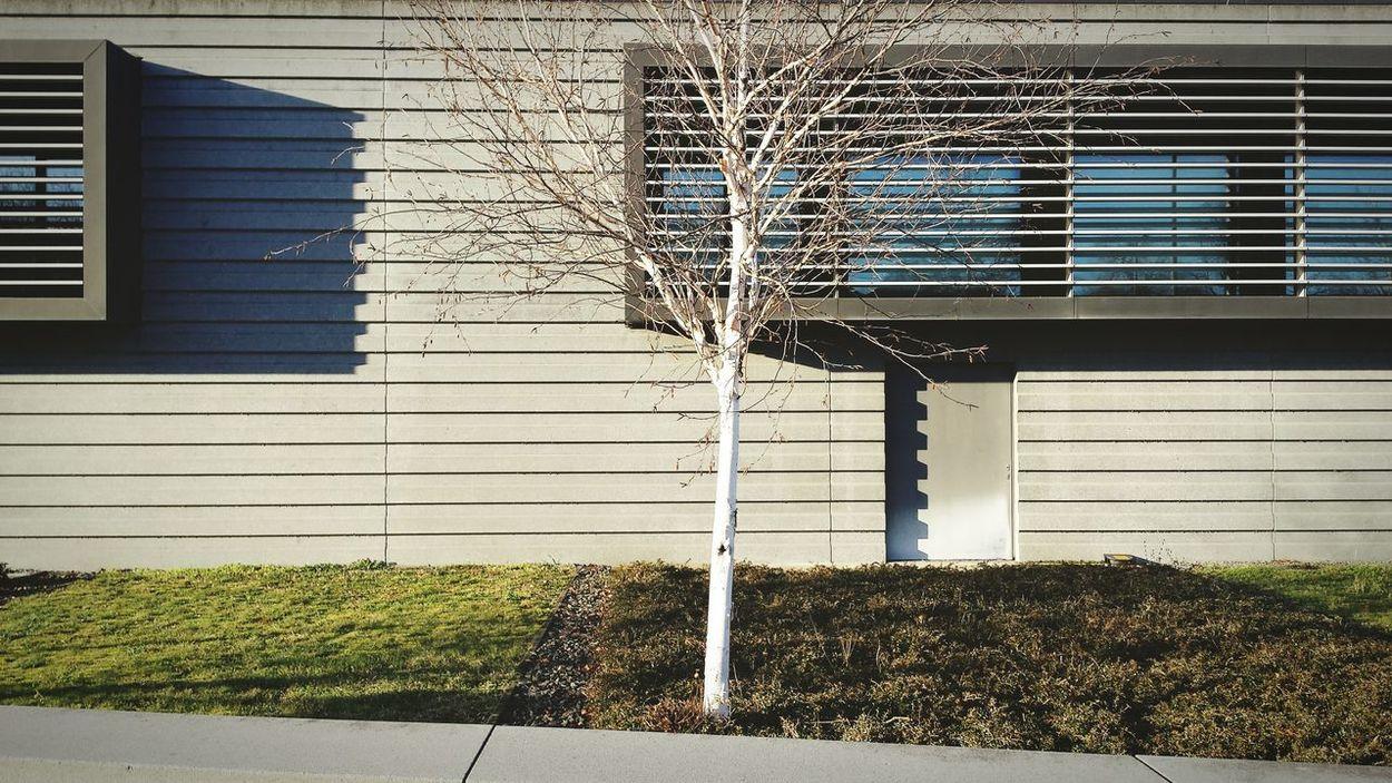 Humboldt University Berlin Tree Architecture Detail Light And Shadow Sunny Winter The Architect - 2016 EyeEm Awards