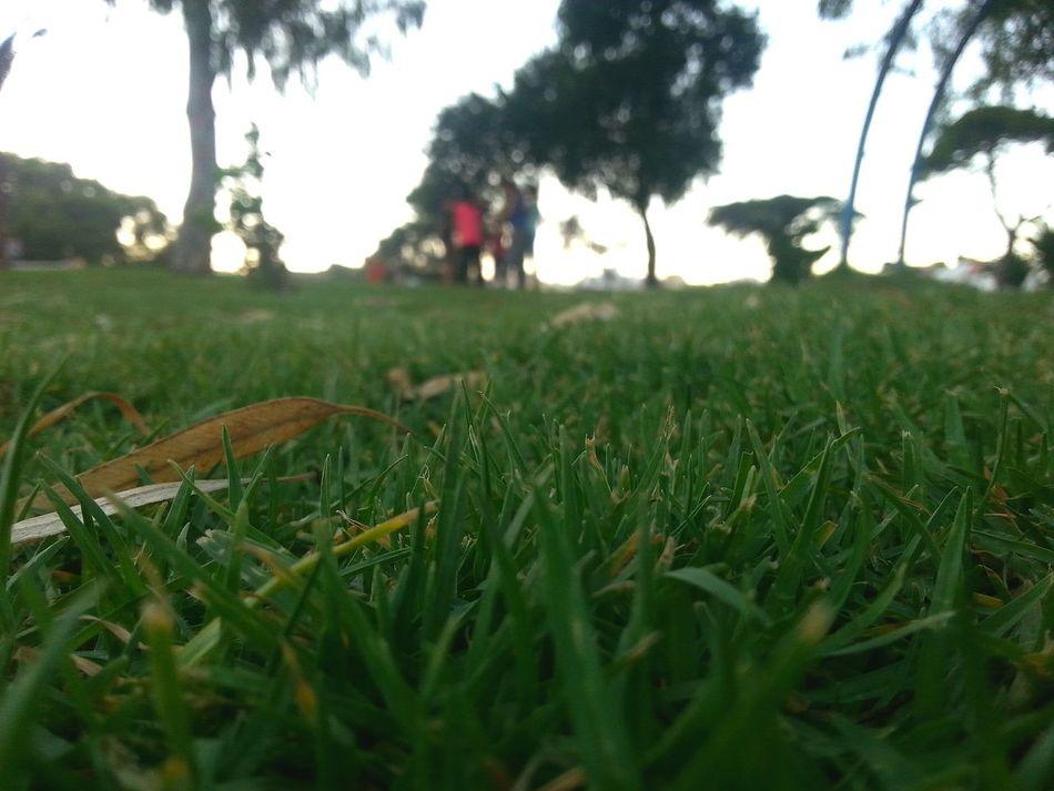 Green Grass Green Grass Mellow Nature Playground Park Kids Game At Park Kids Playground Kids Playing Kids Playing In Park Nature_collection Nature Photography Lawn Evening