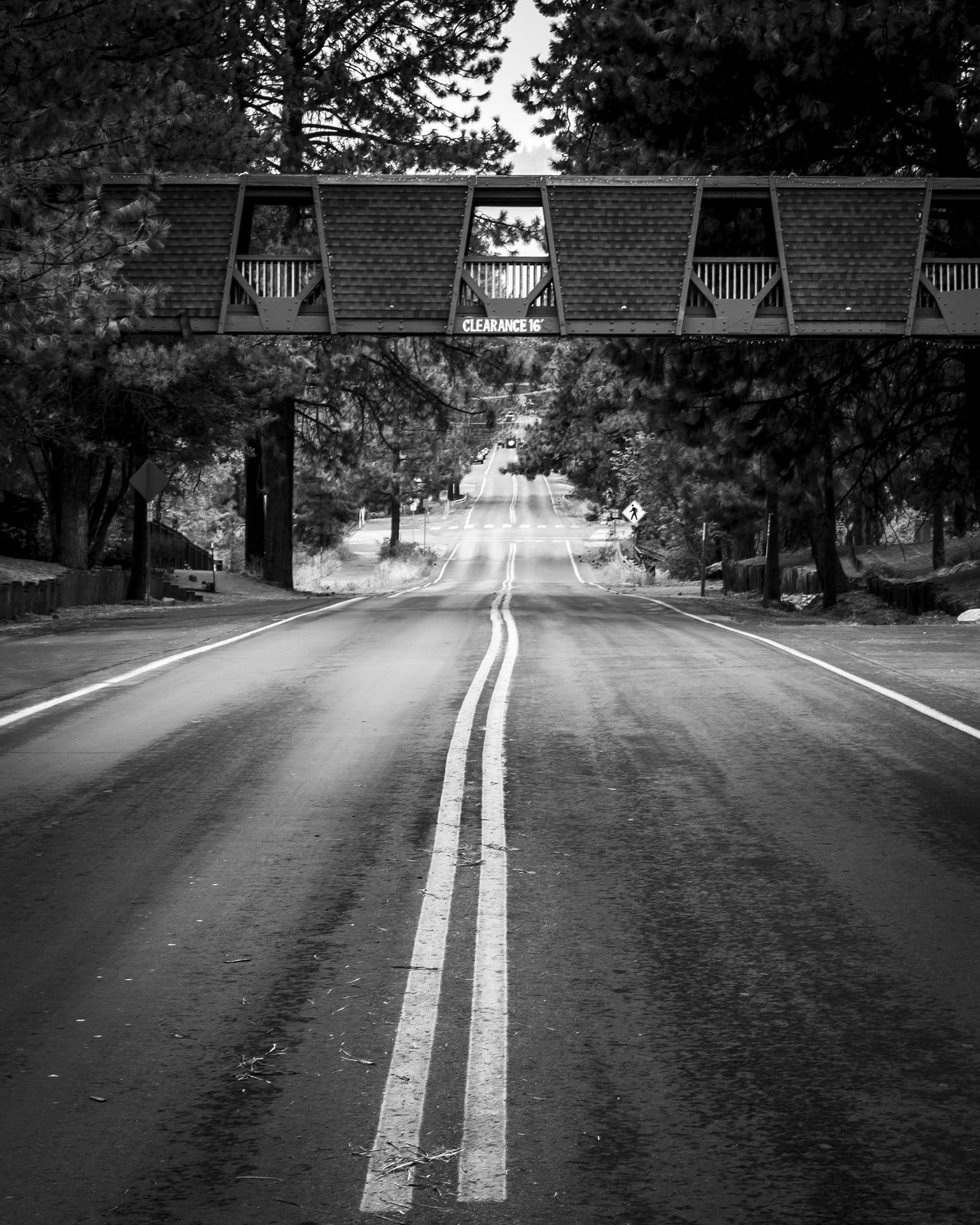Blackandwhite Bridge Built Structure California Distance EyeEm EyeEm Best Shots EyeEm Gallery EyeEm Nature Lover Lake Tahoe No People Outdoors Road The Long Road The Way Forward This Week On Eyeem Transportation Tree