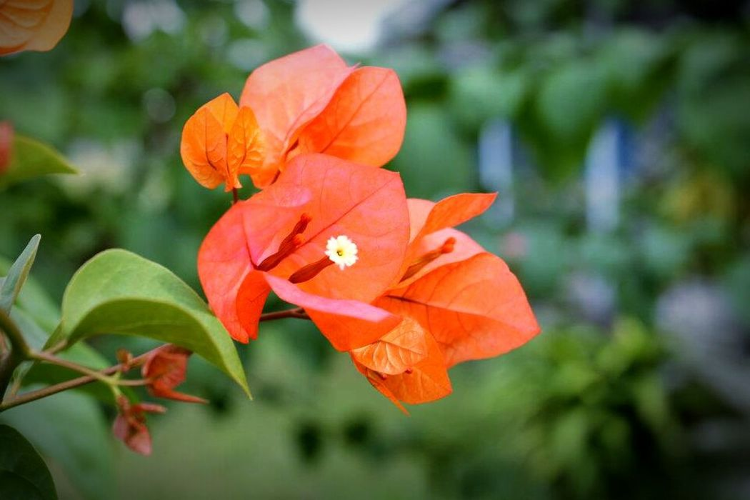 Beauty Beautiful Beautiful Flower Flowers Flower Red Interesting Nature Bunga Merah