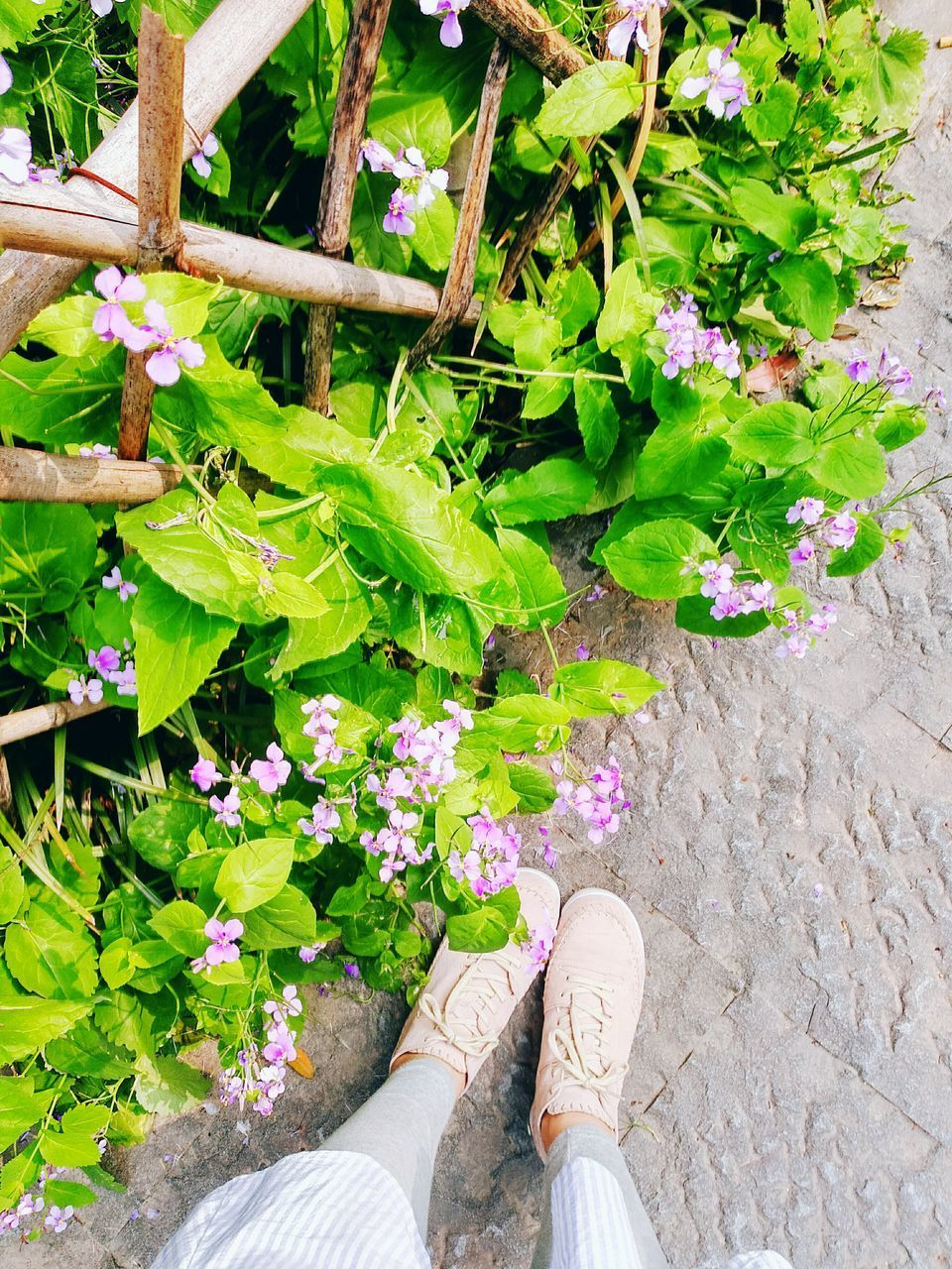 plant, high angle view, shoe, low section, growth, leaf, day, flower, outdoors, directly above, human leg, standing, green color, one person, nature, real people, fragility, flower head, beauty in nature, close-up, freshness, people