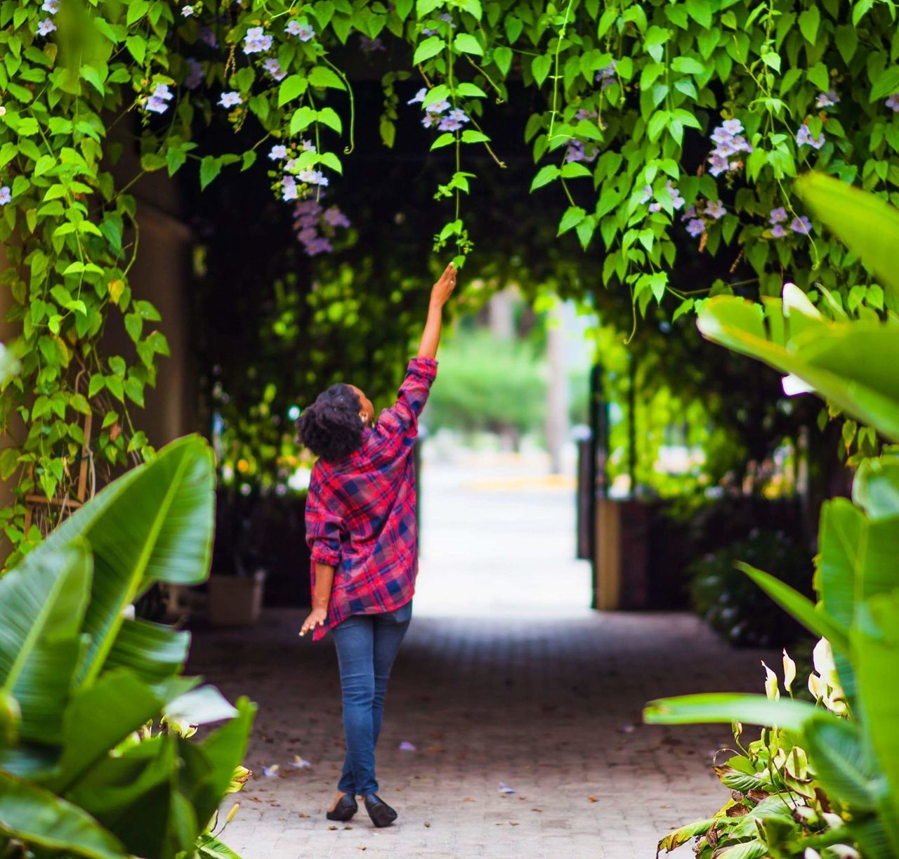 rear view, full length, real people, one person, arms raised, walking, casual clothing, plant, outdoors, day, leaf, tree, standing, lifestyles, women, nature, adult, people