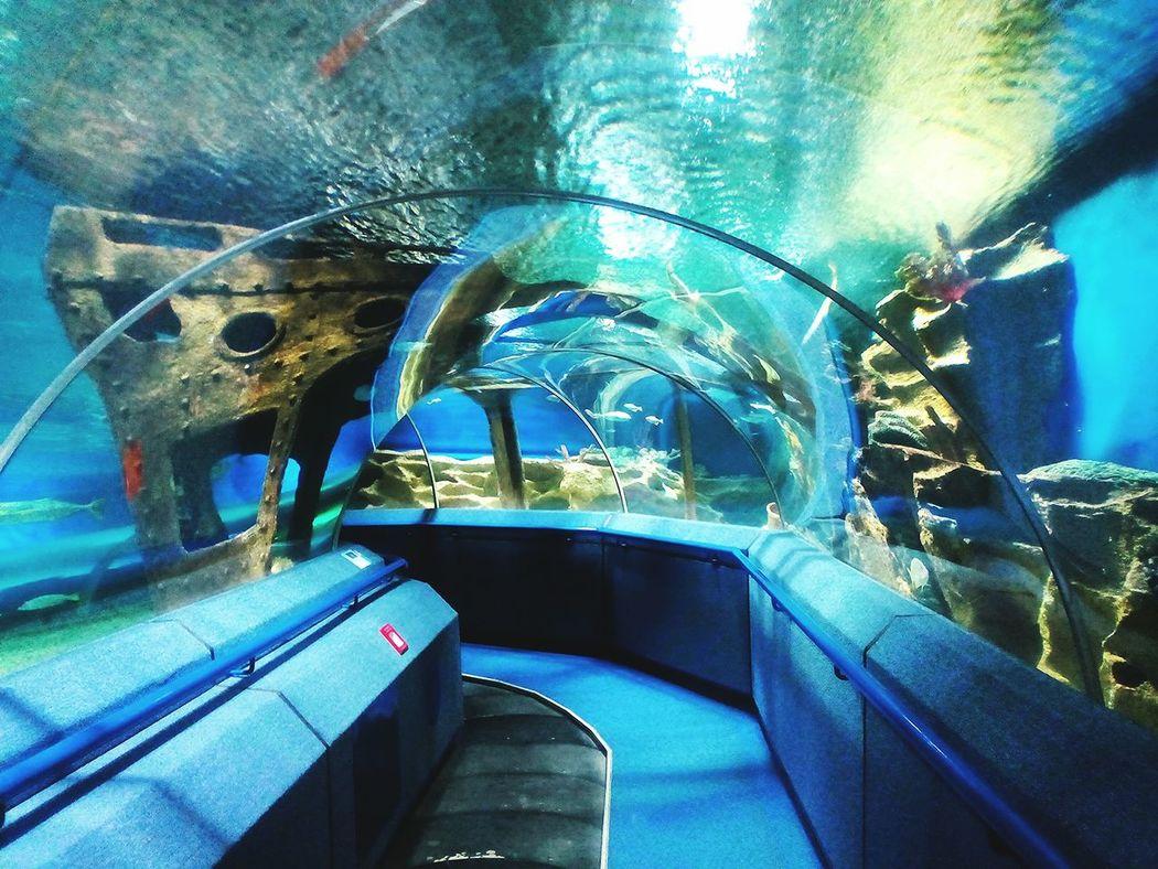 Unbelievable fish swim in this tonnel Saint-Petersburg Ocean океанариум