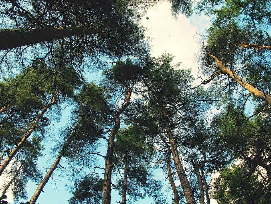 Walking through the woodland looking upwards can be dizzying. Woods Walkinthewoods Trees Nature Upshot Talltrees Sky Leaves Autumn Leaves Nature On Your Doorstep Hebden Bridge
