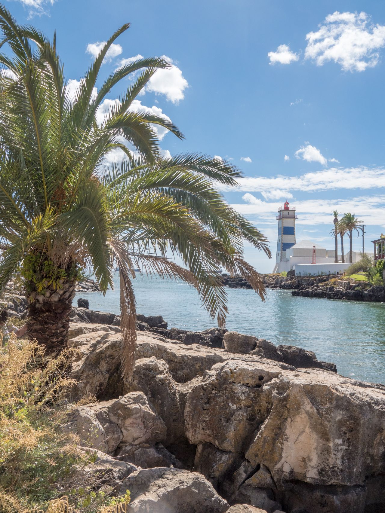 Palmen und Leuchtturm | Palm trees and lighthouse Palm Tree Lighthouse Portugal Lagos Leuchtturm Sea Water Sun Rocks