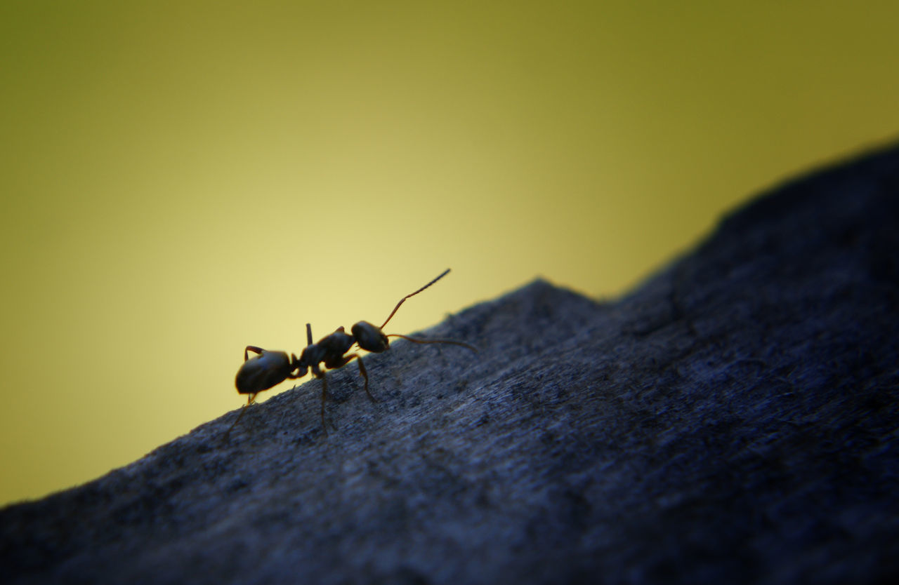 I spotted this ant on top of my fence. Hope you like it Animal Themes Animal Wildlife Animals In The Wild Ants Ants At Work Ants Close Up Ants On The Go! Antsmarching Close-up Day Insect Nature No People One Animal Outdoors Selective Focus