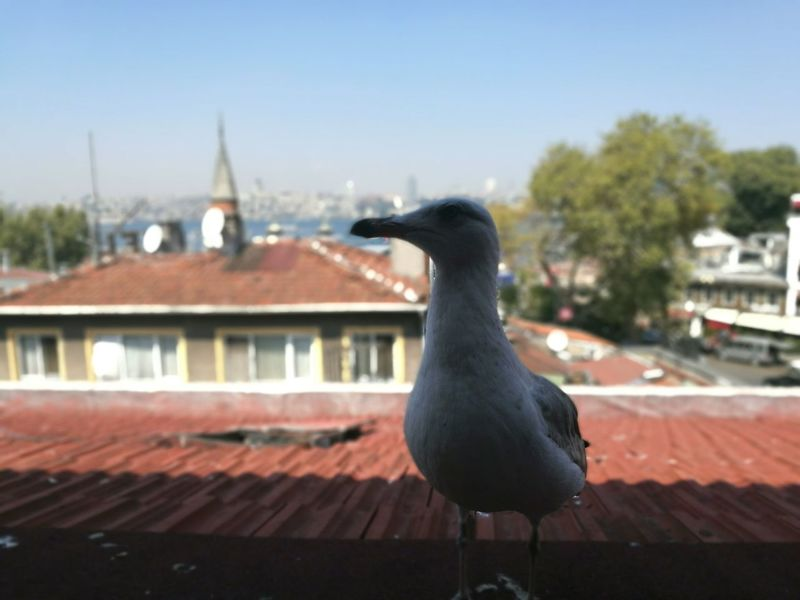The Ice Age Seagull Bosphorus The Magic Mission Love Photography EyeEm Best Shots HuaweiP9 Two ıs Better Than One EyeEm Gallery A Bird's Eye View My Favorite Place Adapted To The City