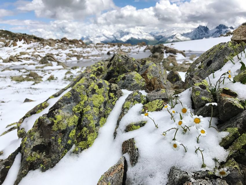Flower Alps Snow Winter Cold Temperature Nature Beauty In Nature Tranquility Weather Tranquil Scene Scenics Outdoors Mountain Cloud - Sky Day No People Rock - Object Frozen Landscape Sky Daisy Daisies