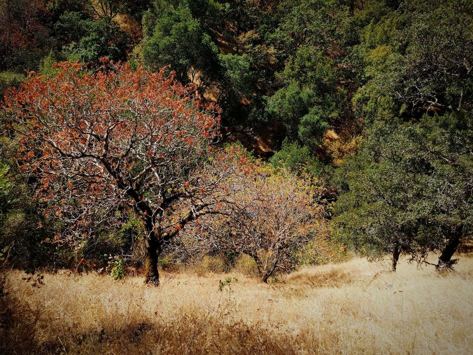 Hiking at Del Valle No People Tree Nature Beauty In Nature Backgrounds Outdoors Day Grass Tree Green Color Wilderness Del Valle Livermore California Fall Beauty Autumn
