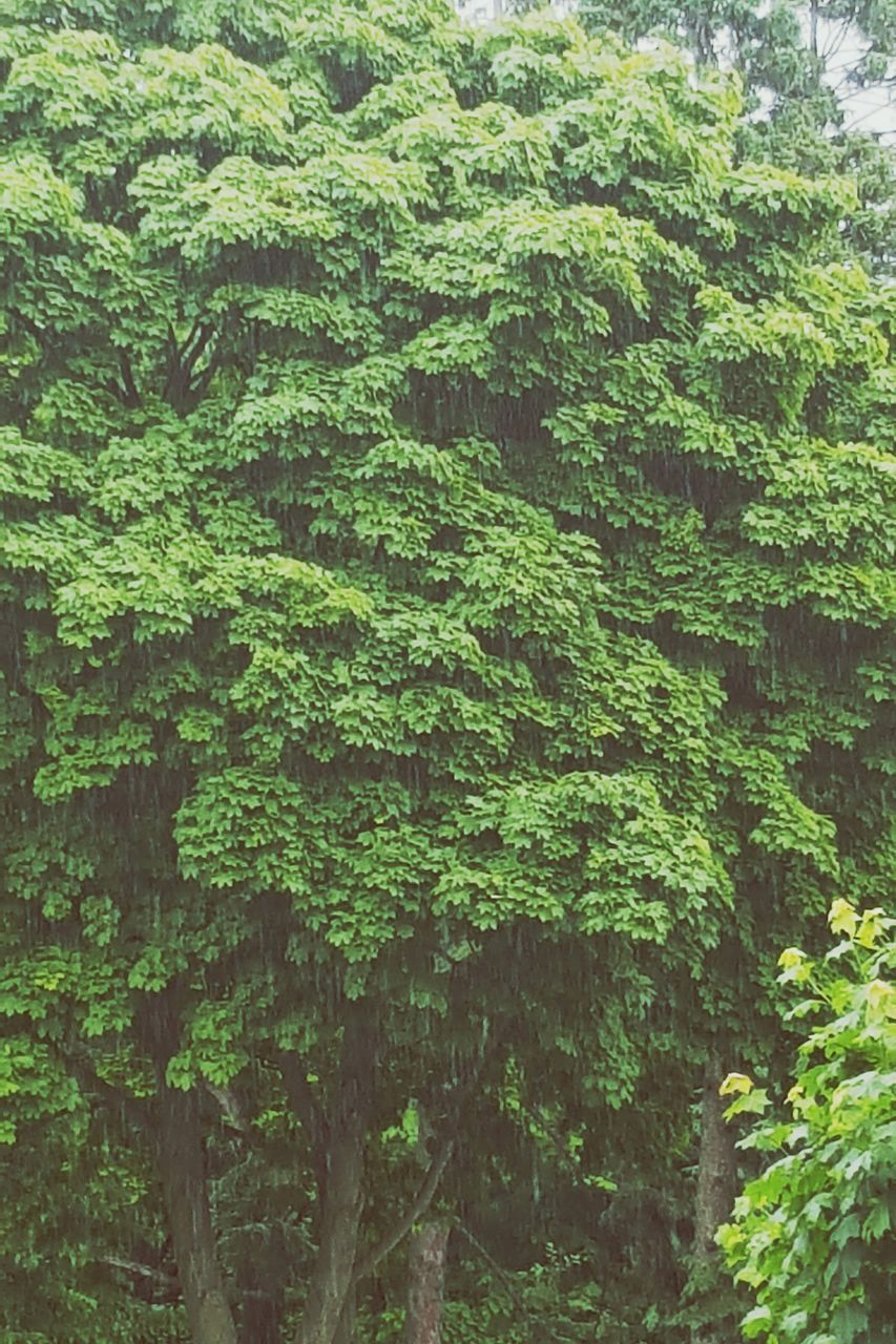 forest, lush foliage, nature, tree, green color, day, growth, no people, plant, outdoors, beauty in nature, freshness
