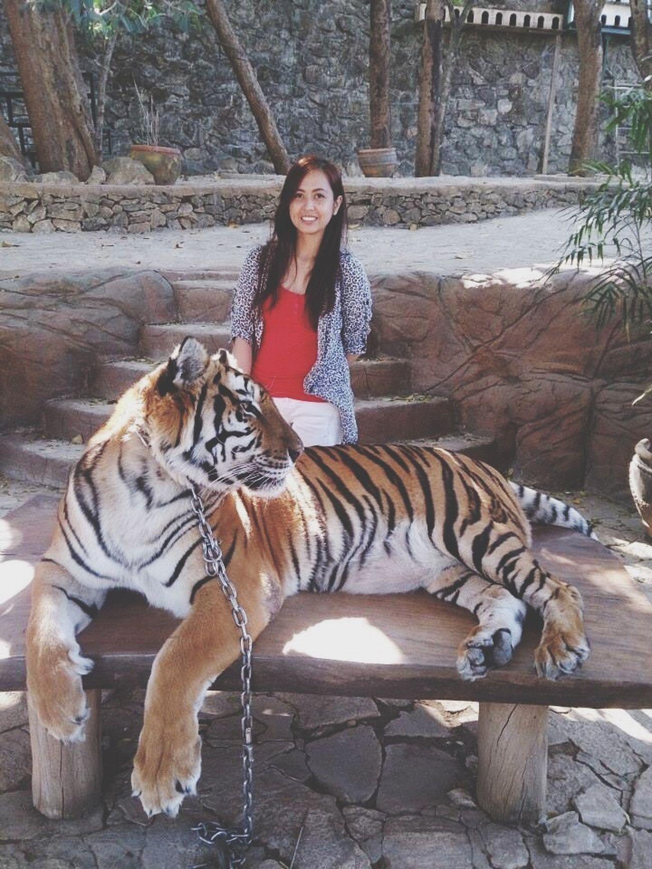 BaluarteNiChavit Vigan Philippines Tiger-love