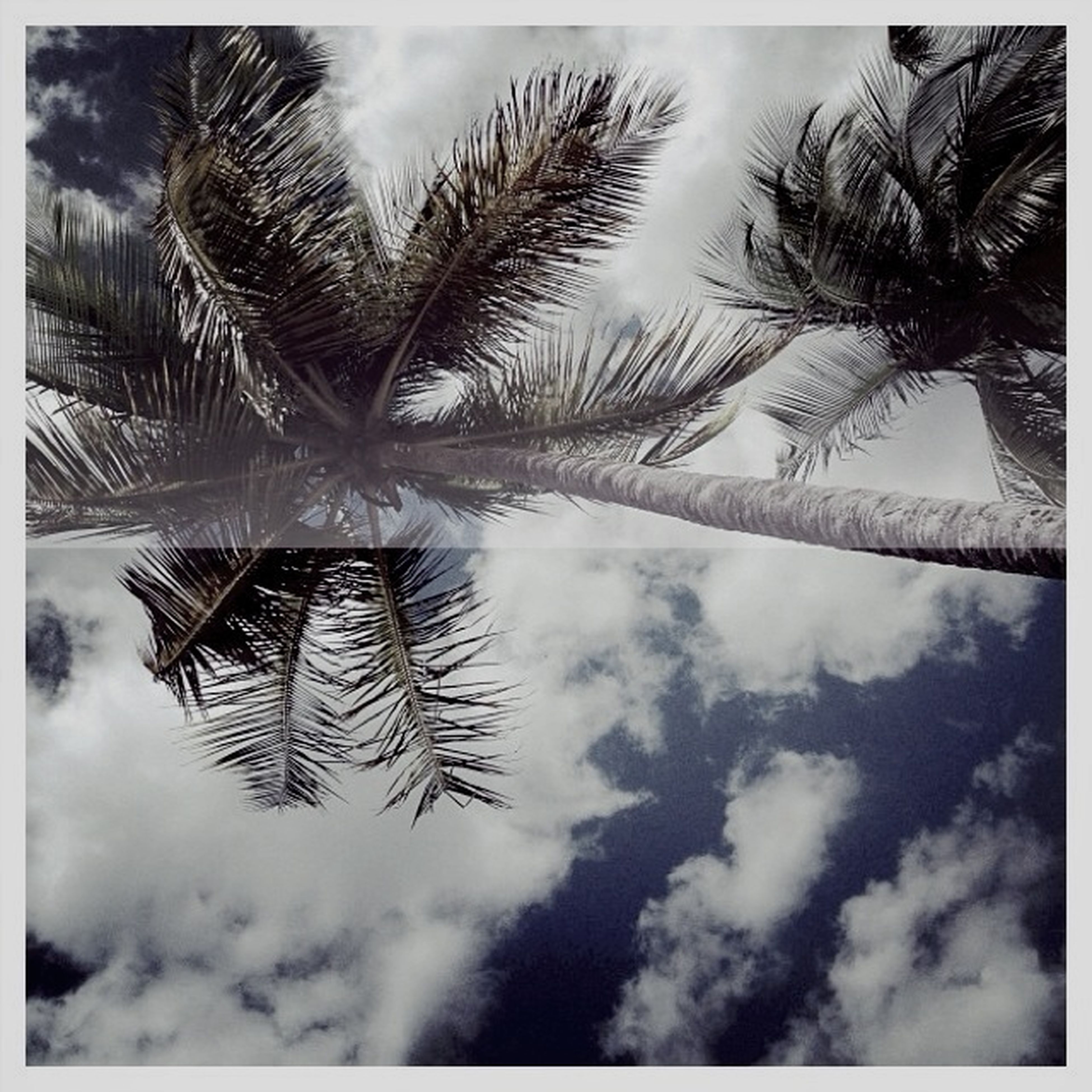 sky, transfer print, tree, palm tree, auto post production filter, cloud - sky, nature, tranquility, cloud, beauty in nature, low angle view, growth, day, cloudy, tranquil scene, outdoors, no people, branch, tree trunk, scenics