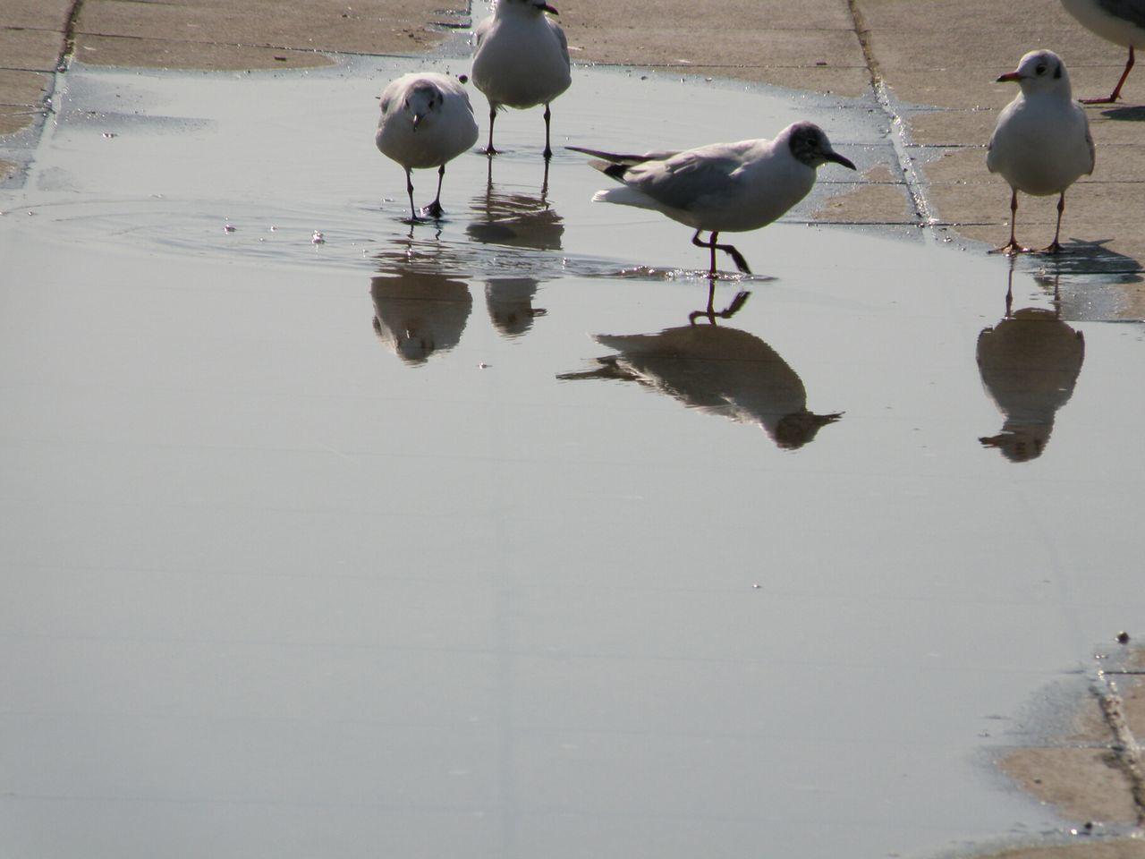 Birds Walking Water Dock Reflections Blue Sky Thessaloniki Greece Hellas