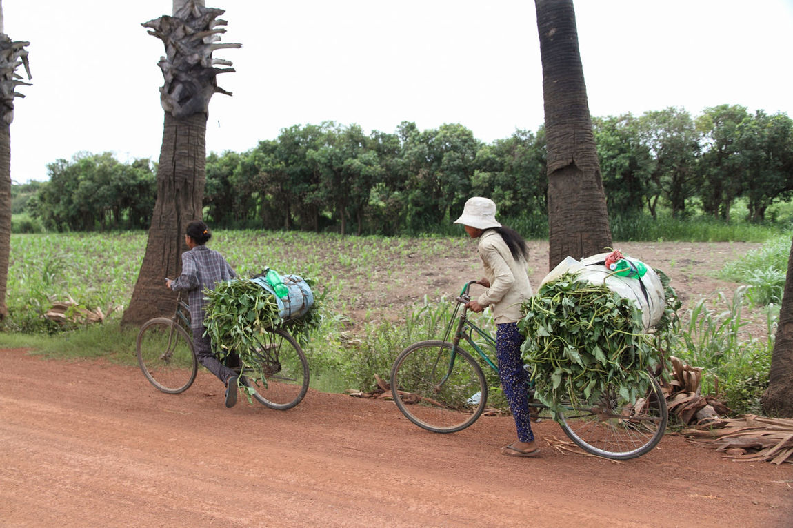 Bicycle Bike Cambodia Cut Foliage Cycle Day Dirt Road Grass Green Color Land Vehicle Mode Of Transport Outdoors Road Rural Scene Stationary Tree Women