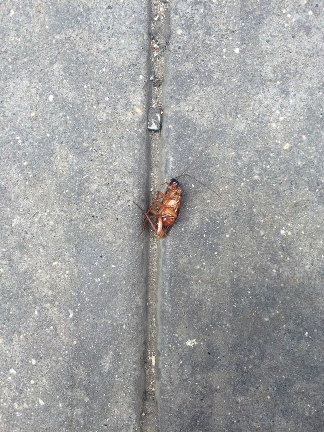 Cockroach Dead Insect Street NYC New York New York City