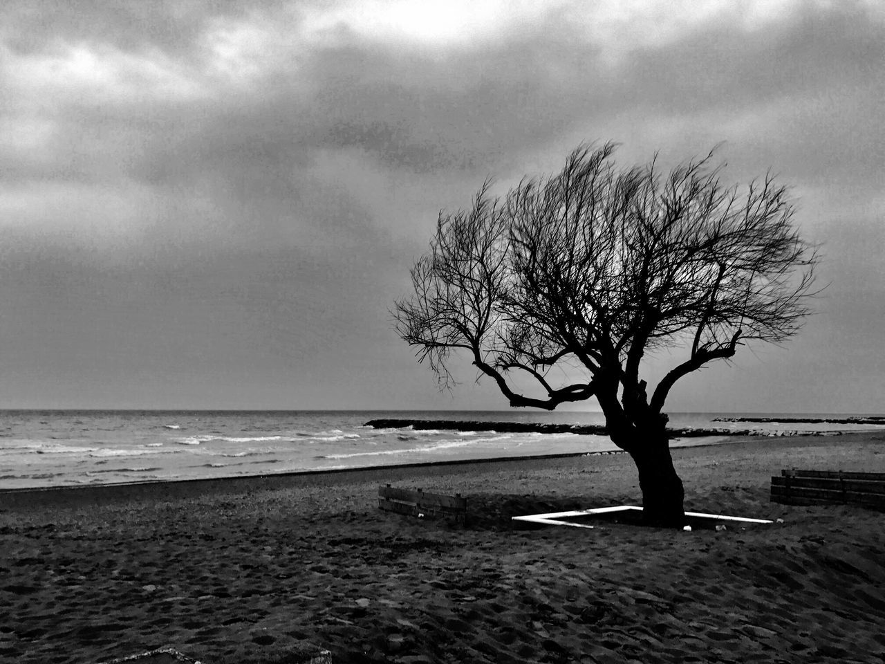 Tree Nature Sea Tranquility Bare Tree Horizon Over Water Lone Beauty In Nature Isolated Sky Branch Remote No People Beach Tranquil Scene Scenics Tree Trunk Landscape Outdoors Water