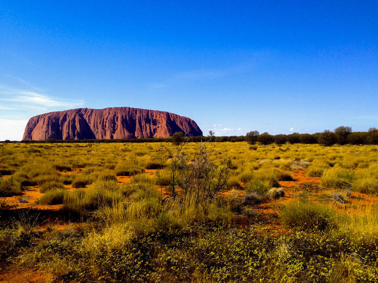 Australia Ayers Rock Beauty In Nature Blue Clear Sky Desert Grass Indigenous  Landscape Nature Northern Territory Red Centre Red Dirt Scenics Uluru