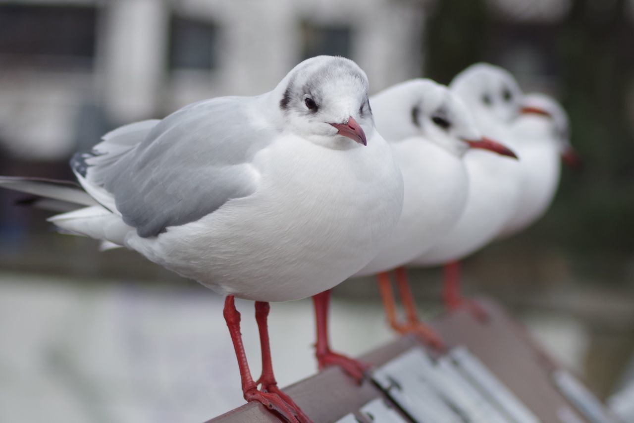 Close-Up Of Perched Birds