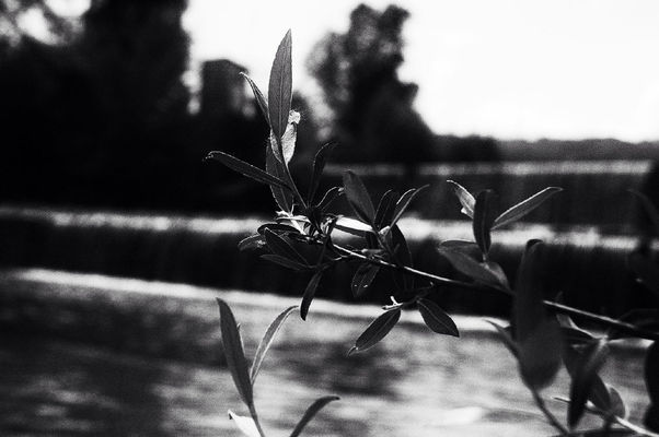 blackandwhite at Natura ... by isablu
