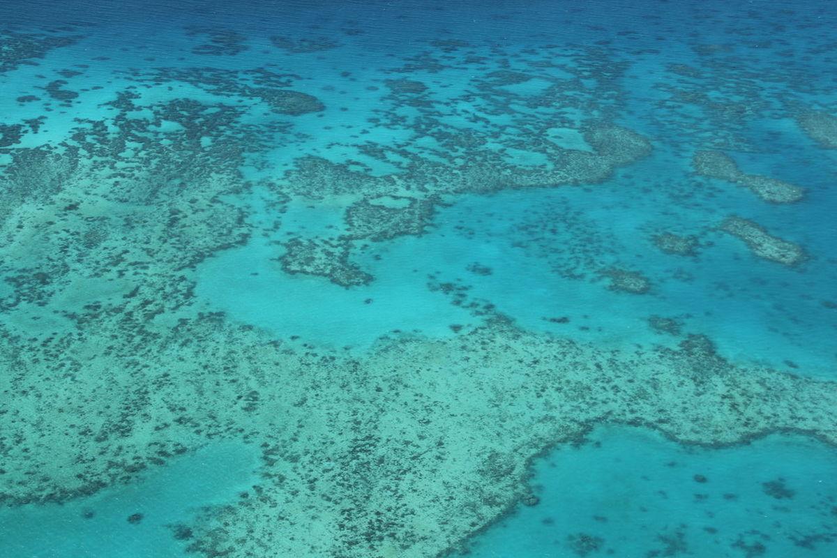Cairns Coral Coralreef Great Barrier Reef North Queensland Vacations Water Wet