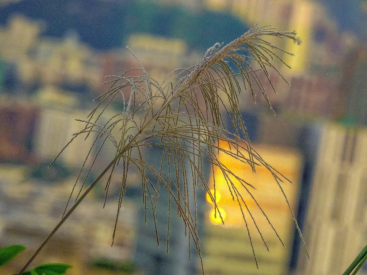 Grass Flowers Grass And City EyeEm Best Shots - Nature EyeEm Gallery Evening Light Flowers Beautiful Nature Natural Beauty Nature Photography EyeEm Nature Lover My Unique Style My Point Of View Artistic Expression Nature On Your Doorstep Hiking_walking Wild Flowers