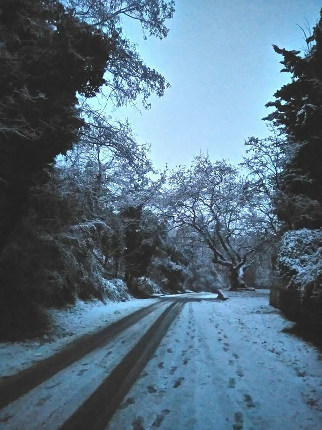 EyeEm Best Shots Foggy Day It's Cold Outside Snowtrail Footprints Snow Winter Cold Forest Path Forest Path