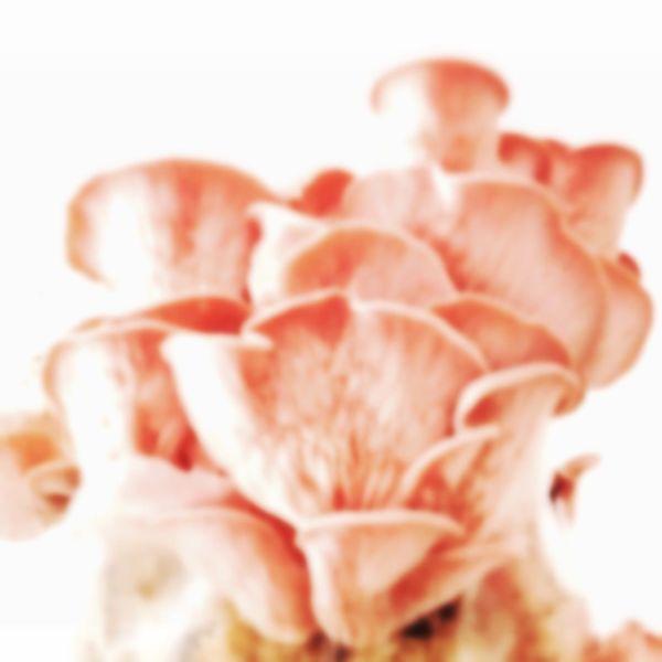 Blur On Purpose IPhone Art Minimalobsession Fungus Addict