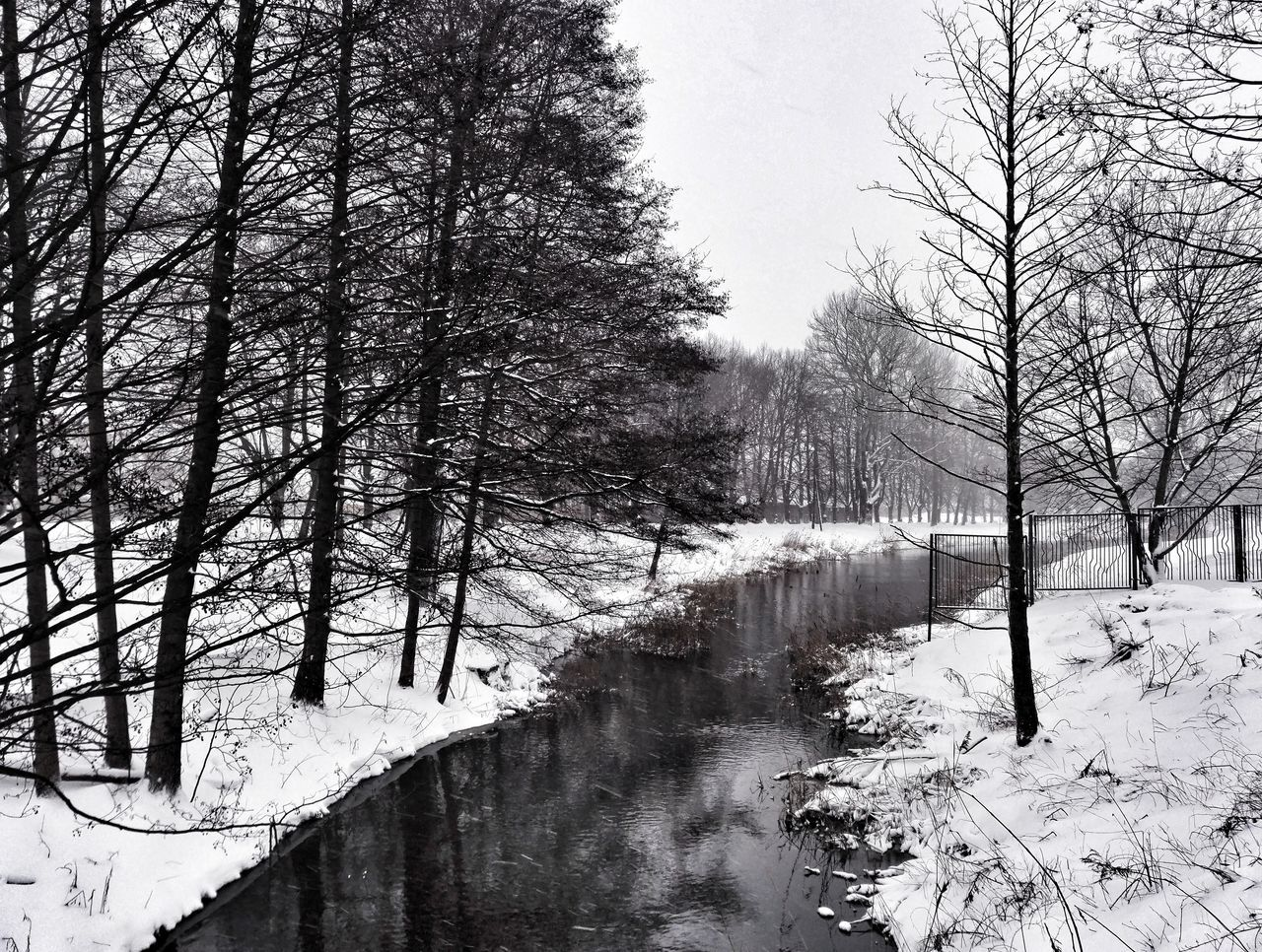 Tree Day Nature Water Snow Cold Temperature Winter Hello World Enjoying Life Black And White Cityscape Water_collection
