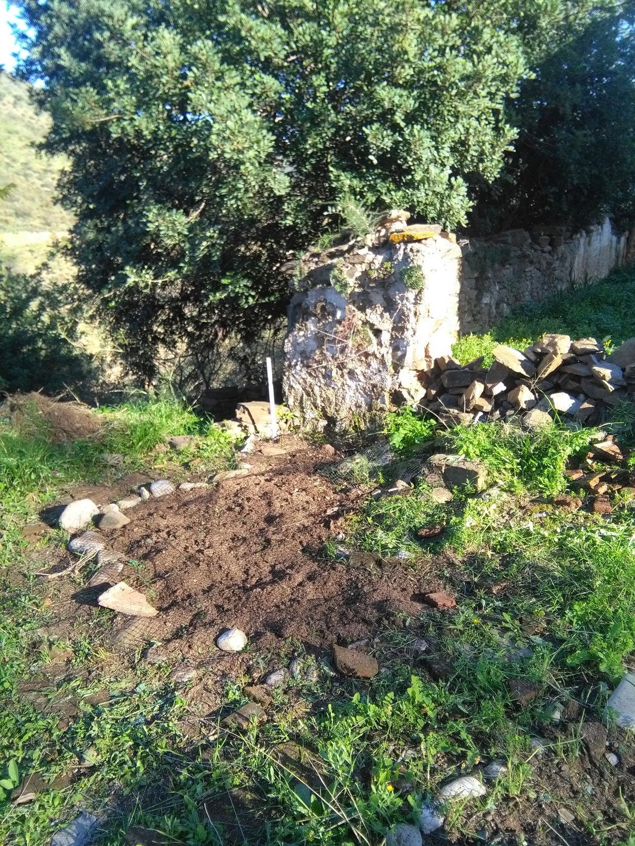 Resurrecting the veggie plot! What A Wonderful World Saturdaysong_eyeemchallenge