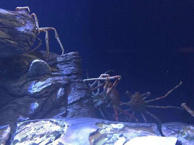 Aquarium No People Nature Indoors  Underwater Animal Themes Sea Life Close-up UnderSea Day Goldfish Outdoors UnderSea