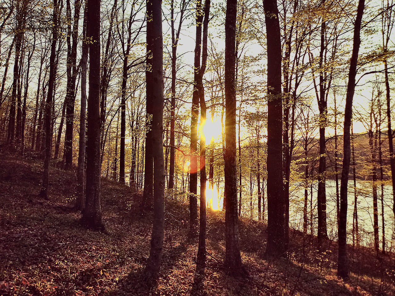 Tree Forest Nature Tree Trunk Outdoors No People Sunlight Day Beauty In Nature WoodLand Sunset Sky Landscape Tree Area Grass Walking Sun Nature Sunsetcolors