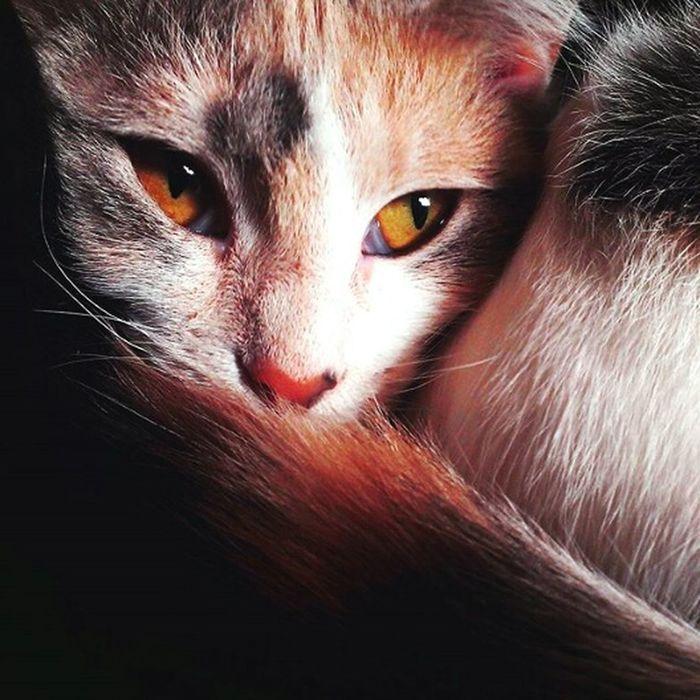 Cats Cat Lovers Phonephoto PhonePhotography