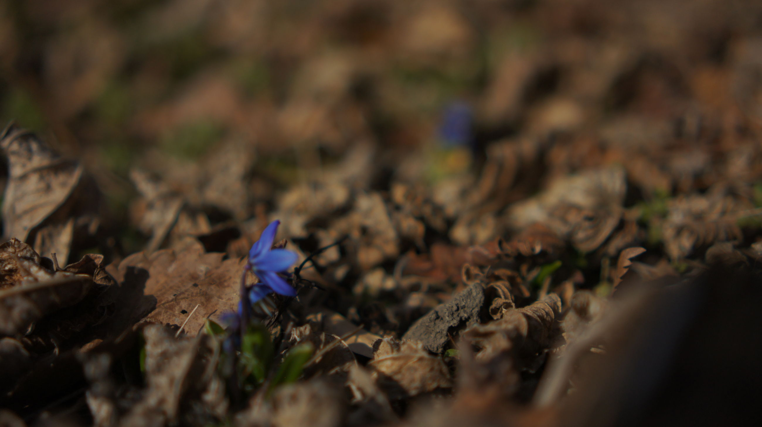 selective focus, dry, close-up, nature, field, growth, plant, leaf, focus on foreground, fragility, ground, fallen, outdoors, beauty in nature, day, no people, tranquility, surface level, high angle view, autumn