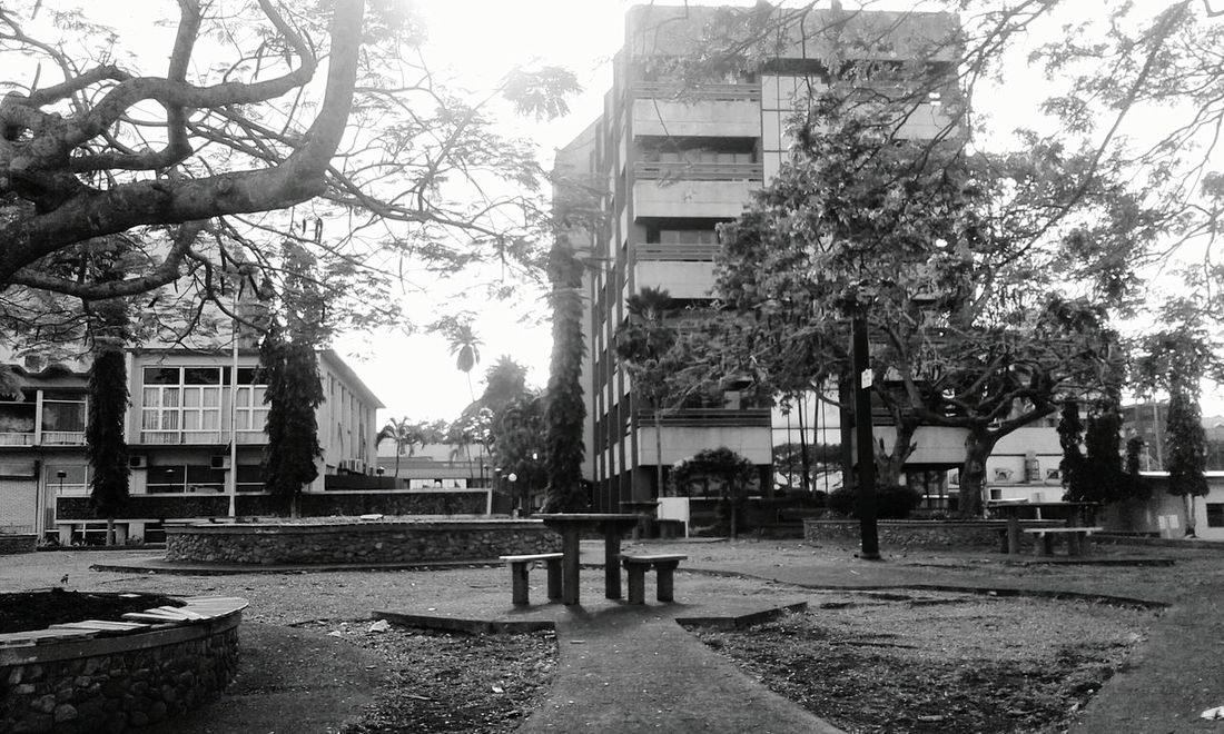 Monochrome Photography Architecture Building Exterior Built Structure Tree Bench Residential Building Residential Structure Empty City Park Bench Tower Outdoors Footpath Day City Life Lawn Walkway Pathway Sky Residential District The Week On EyeEem The Week Of Eyeem Shekelsphotography Dramatic Angles The Street Photographer - 2017 EyeEm Awards