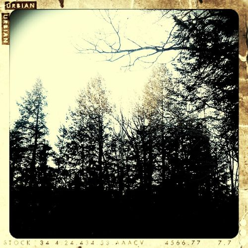 Sun on the tree tops