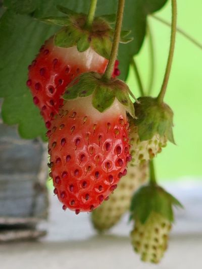Strawberries Fruits Naturelover Rede Fruits