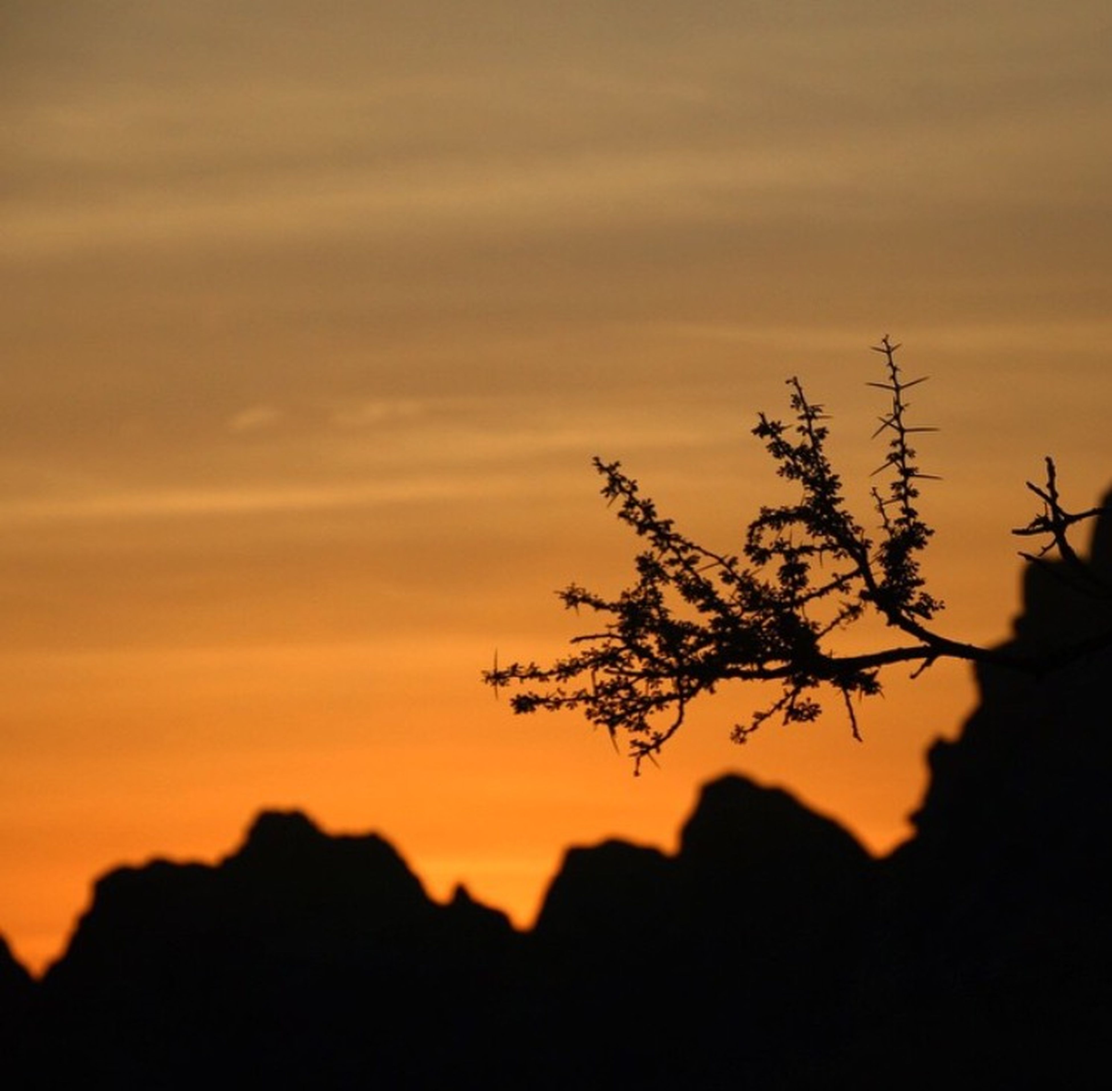 silhouette, sunset, sky, beauty in nature, tree, nature, branch, growth, tranquility, orange color, low angle view, scenics, tranquil scene, focus on foreground, outdoors, plant, no people, dusk, idyllic, cloud - sky