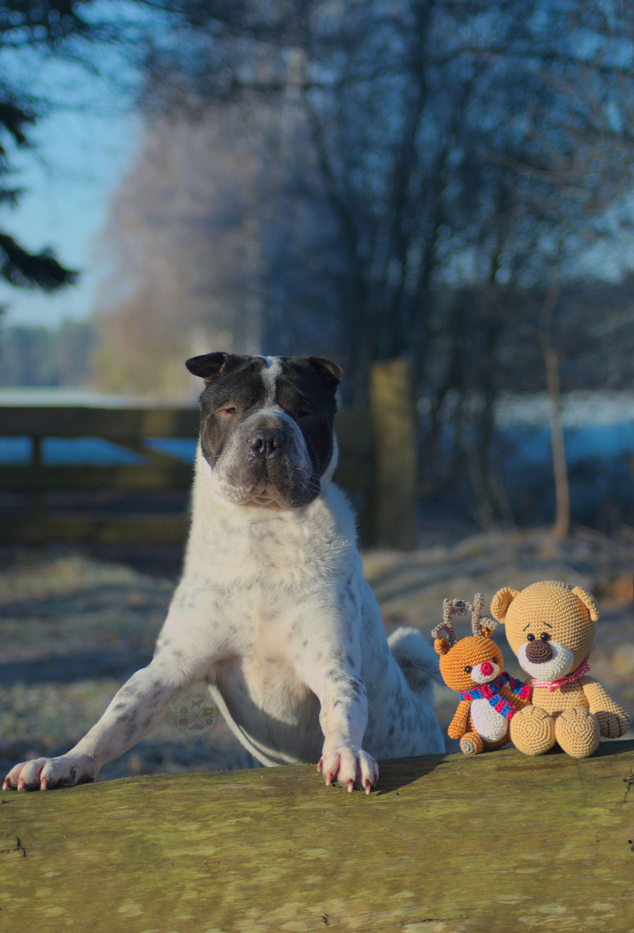 One Animal No People Animal Themes Outdoors Animals In The Wild Tree Pets Day Nature Natur Bergen Celle Nikon Wald Fluss Beauty In Nature Snow Hund Dog Photography Hundefotografie Dog