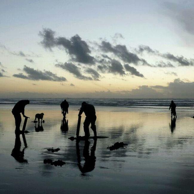 Razor Clams Ocean Sunset Beach