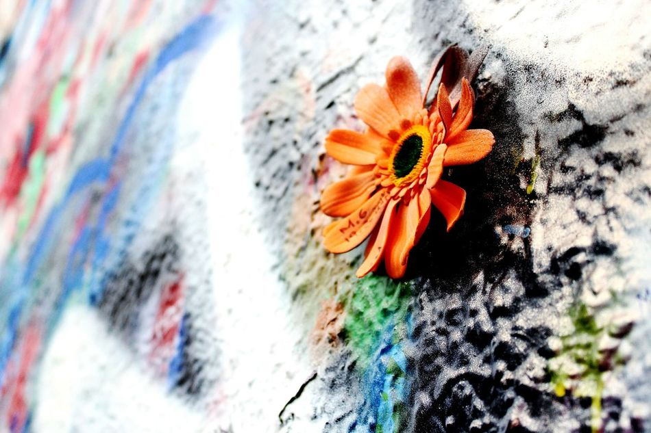 Multi Colored Flower Colors Flowers Wall Wall Art Wallart Wall Painting Wallflower Wall Murals John Lennon Wall Decorations -in John Lennon's Wall, Prague Czech Republic Art Is Everywhere