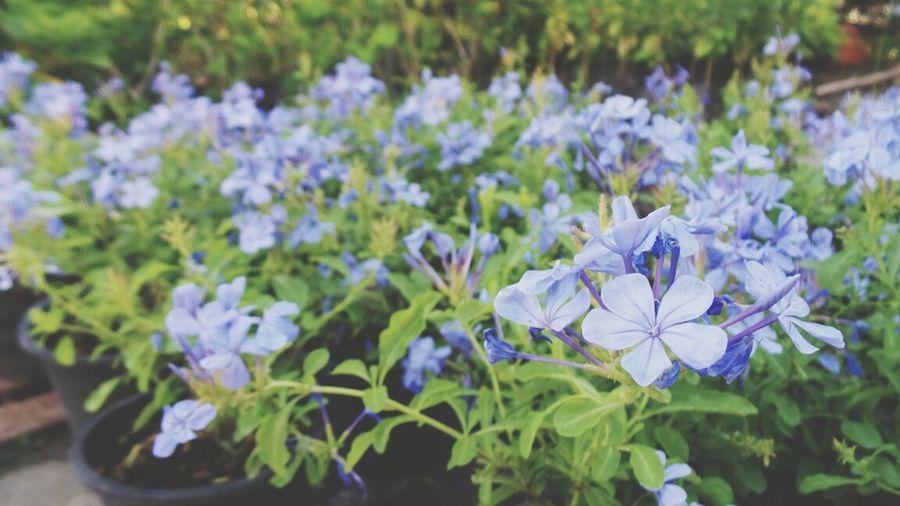 Flowers Flowers,Plants & Garden