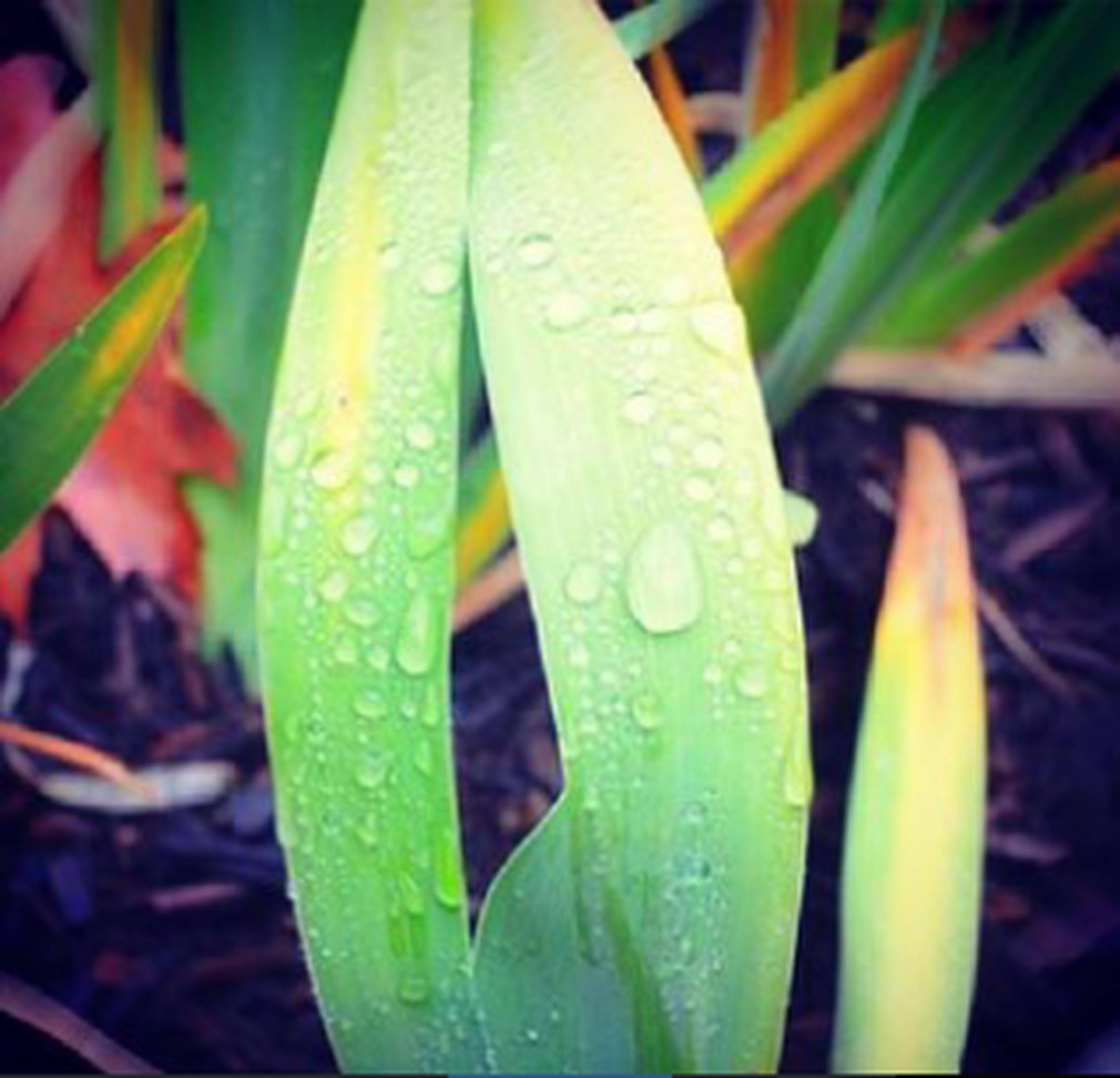 drop, leaf, close-up, wet, green color, growth, water, freshness, plant, nature, focus on foreground, dew, beauty in nature, fragility, raindrop, selective focus, day, outdoors, droplet, rain