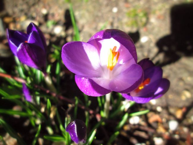 Vivid Beauty. Taken on my way to Carshalton ponds. Soaking Up The Sun Nature Flower Macro