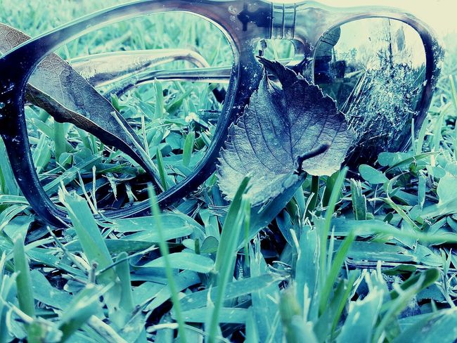 Taking Photos Check This Out Enjoying Life Showcase : January Showcase: January Macro Beauty Eyeemphotography EyeEm Gallery Macro Week Macro Photography Macro_collection Sunglasses Grass Blades Broken Glasses Leaf The Great Outdoors With Adobe