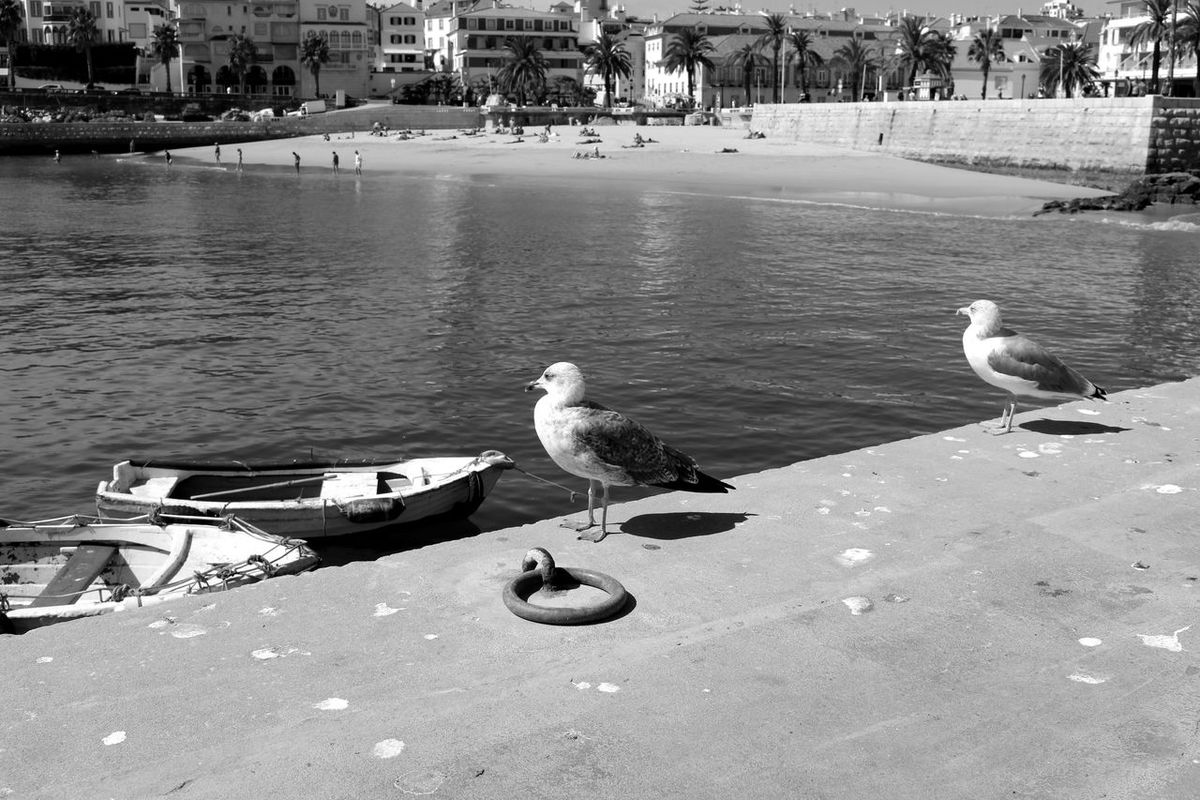 Seagull Boats Buildings Calm Sea Dock Beach Eye4photography  EyeEm Bird Photography Blackandwhite Eye4black&white  Birds_collection EyeEm Best Shots EyeEm Nature Lover Eyeemphotography EyeEmBestPics Urban Landscape Water Black & White Black And White People Seaside Taking Photos Baia De Cascais Portugal