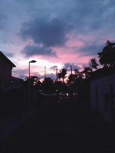 Sunrise Palm Trees Holidays