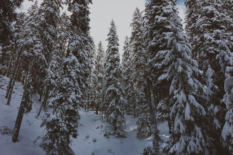 Mountainlove Mountain Nature Lover Landscape_photography Createtoexplore Alps South Tyrol Snow Winter Cold Temperature Tree Nature Tranquility Beauty In Nature Forest No People Landscape