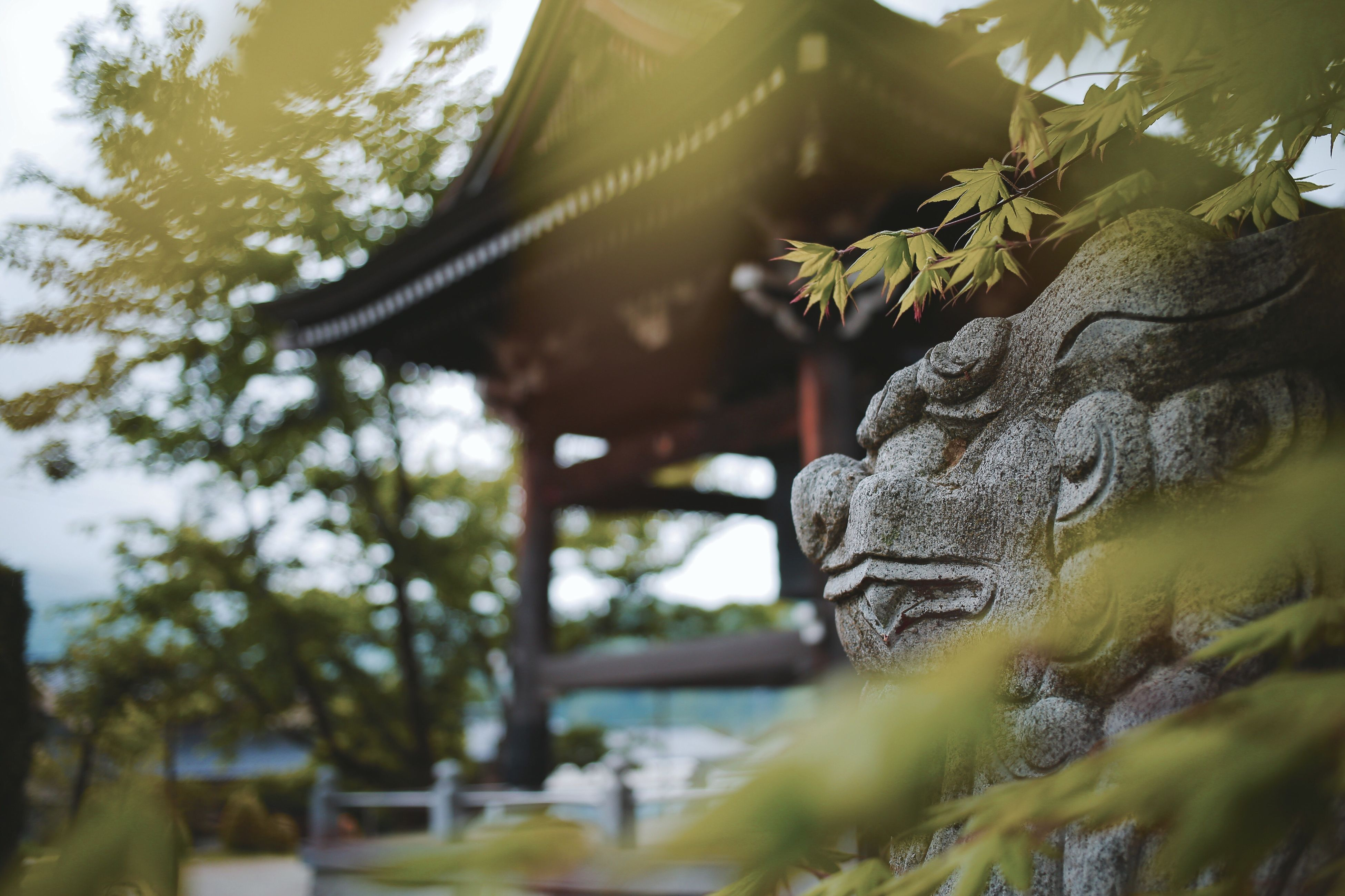 spirituality, religion, statue, no people, selective focus, sculpture, tree, close-up, day, outdoors, low angle view, place of worship, green color, moss, nature, architecture, beauty in nature, sky