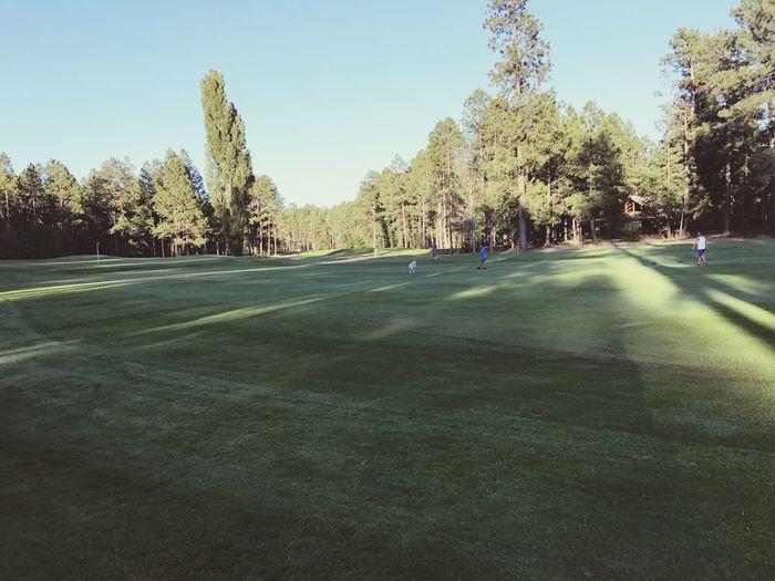 Golf Golf Course Pine Top Pinetop Az White Mountains