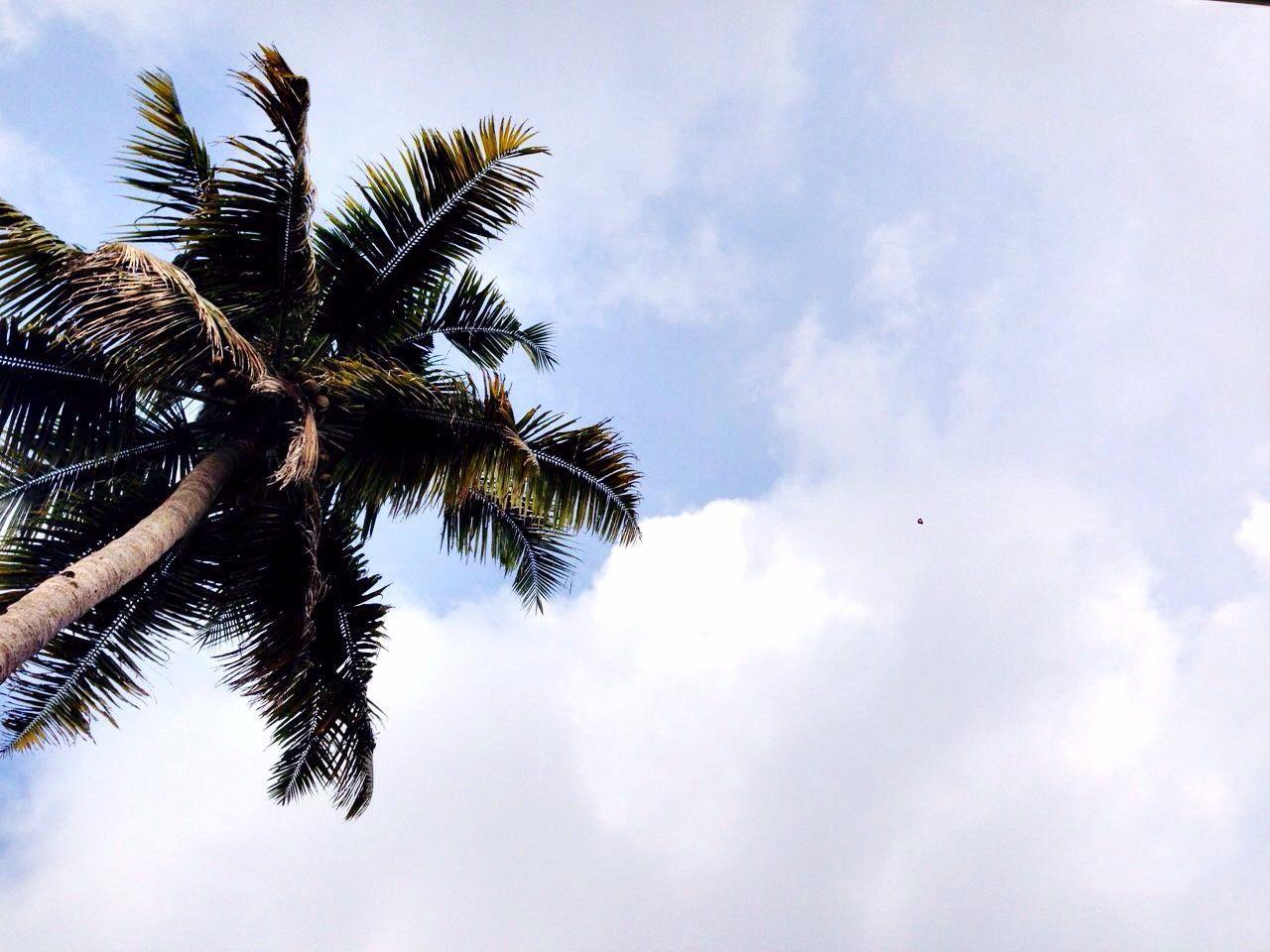Beautiful stock photos of puma, tree, sky, low angle view, palm tree